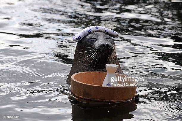 Billy Baikal seal performs as if a man relax in a hot spring with Japanese sake floating in the spring during their show at Hakoneen Aqualium on...