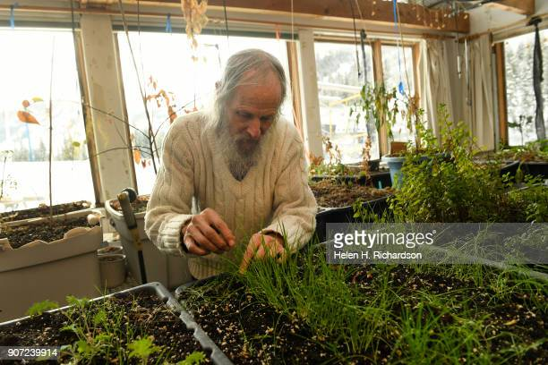 billy barr checks on some of his plants in his greenhouse next to his remote cabin on January 9 2018 in Gothic Colorado barr who is a reclusive...