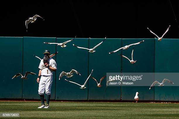 Billy Burns of the Oakland Athletics is surrounded by a flock of seagulls on the field during the ninth inning against the Houston Astros at the...