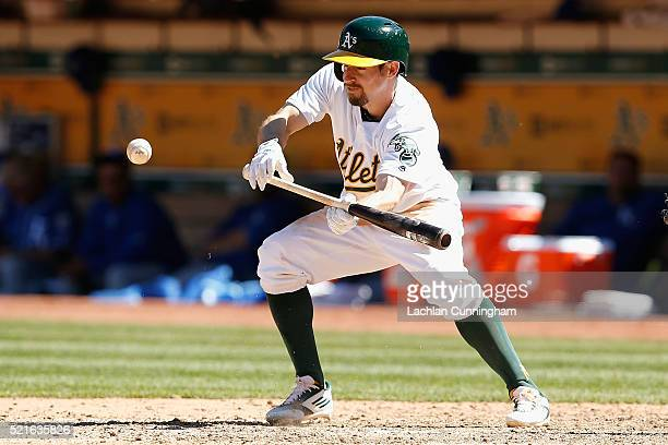 Billy Burns of the Oakland Athletics lays down a sacrifice bunt in the sixth inning against the Kansas City Royals at Oco Coliseum on April 16 2016...