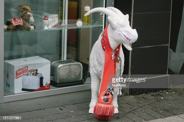 Billy goat which is local favorite Germany football Club 1 FC Cologne in Cologne, Germany on April 29 with face masks stands outside a store.