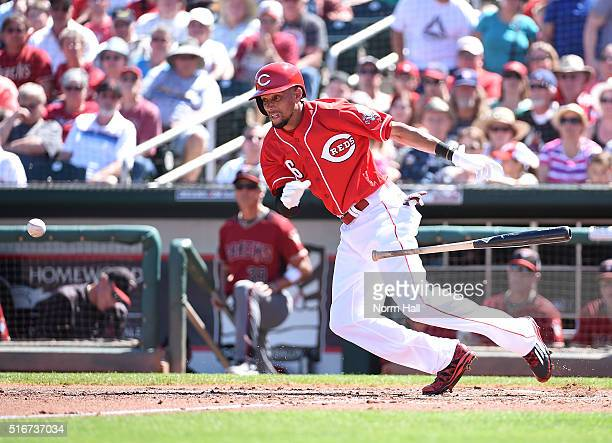 Billy Hamilton of the Cincinnati Reds runs out of the batter's box to first base after laying down a bunt during the first inning of a spring...