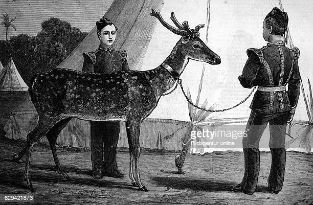 Billy the pet deer of the prince of wales historic image 1883