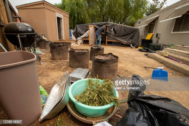 A bin full of marijuana is among debris as a reporter views a makeshift grow shelter on the property where seven people were shot to death over Labor...