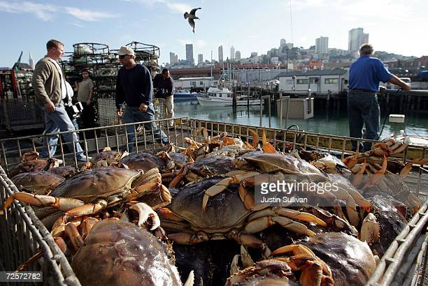 A bin of freshly caught crab is seen after being unloaded from a boat on the first day of dungeness crab season November 15 2006 in San Francisco...