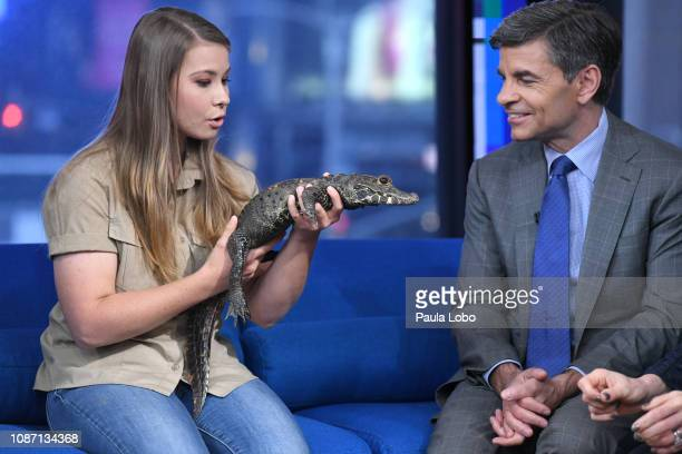 """Bindi Irwin is a guest on """"Good Morning America,"""" Wednesday, Jan. 23 airing on the Walt Disney Television via Getty Images Television Network...."""