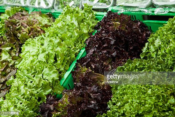 bins of varieties of lettuce - leaf lettuce stock photos and pictures