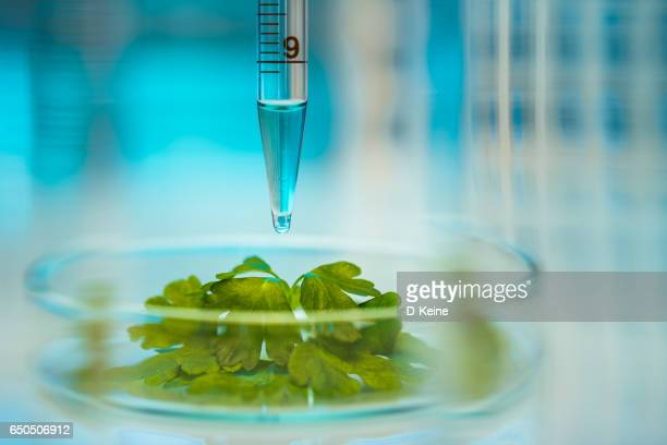 biochemistry - biotechnology stock pictures, royalty-free photos & images