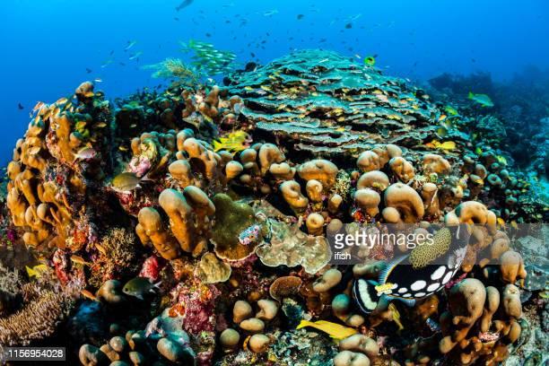 生物多様性フェスティバル、フィッシュアイ写真の全体のリーフ、都市のように!ラジャ・アンパト(インドネシア) - ハードコーラル ストックフォトと画像