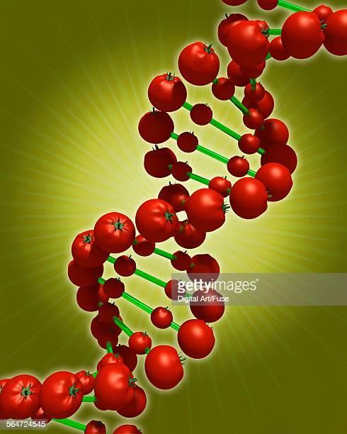Bioengineered Tomato Molecule
