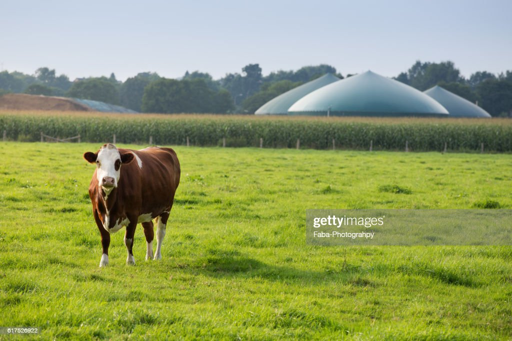 Biogas : Stock Photo