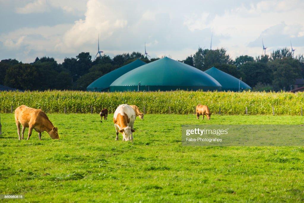 Biogas : Stock Photo