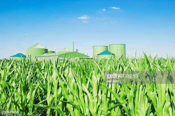 Biogas plant and corn