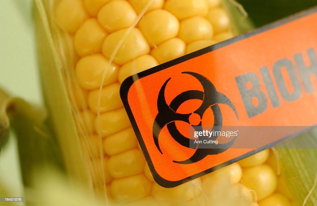 Biohazard corn cob : Stock Photo