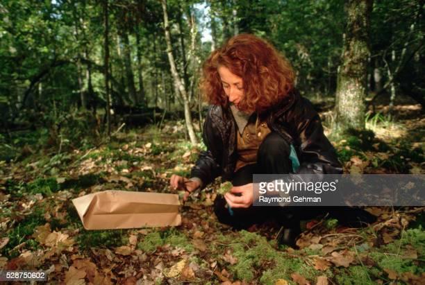 Biologist Collecting Plant Specimens