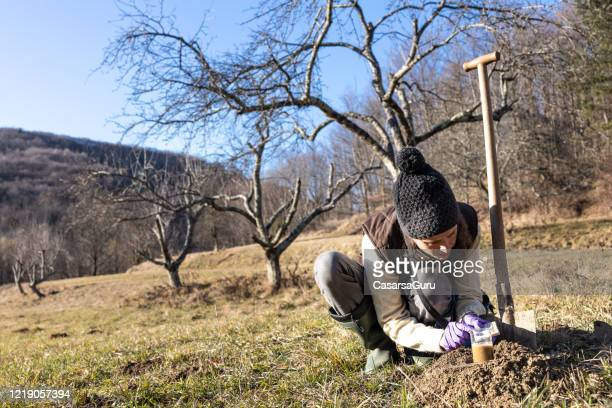 biologist measuring ph value of dirt in an orchard - ph value stock pictures, royalty-free photos & images
