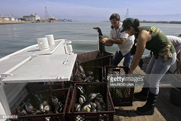 A biologist takes care of a penguin next to a member of the Brazilian Environmental Institute on board of a Brazilian Navy ship during an operation...