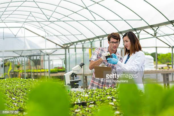 Biologists working together in a greenhouse