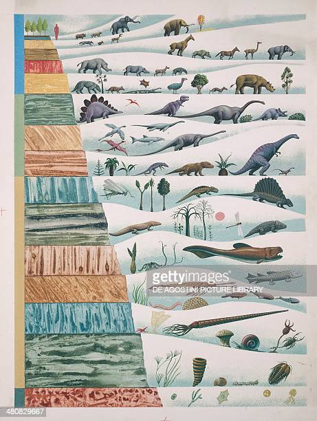 Biology Evolution of the organisms with correlation to geologic eras Illustration