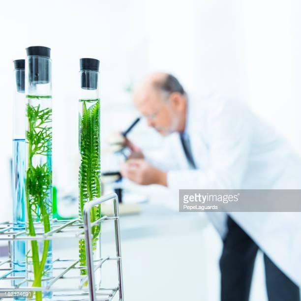 biologie untersuchung - laborschlauch stock-fotos und bilder
