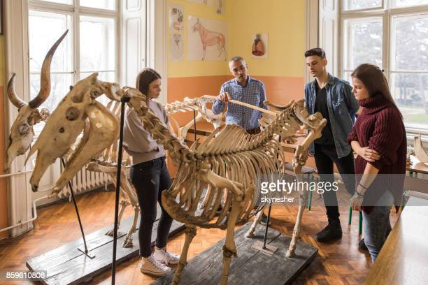 biology teacher giving a lecture to high school students. - animal bones stock photos and pictures