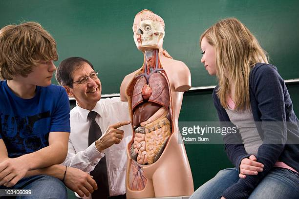 a biology teacher teaching students anatomy - anatomical model stock pictures, royalty-free photos & images