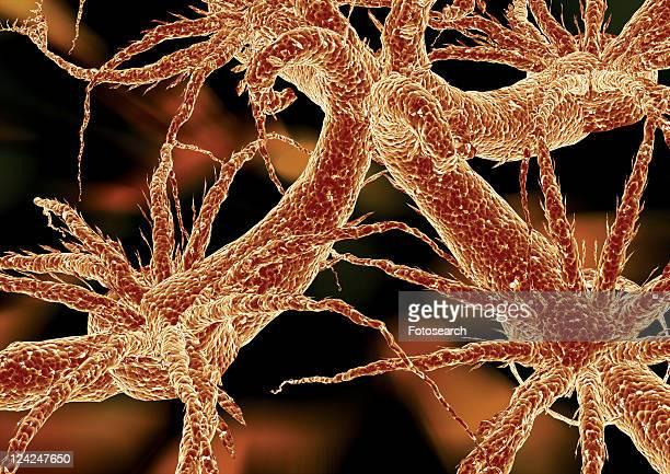Biology, Unicellular Planktonic Organism, Micro, Research, Anatomy
