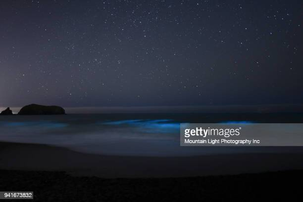 bioluminescence and stars in the marin headlands - bioluminescence stock pictures, royalty-free photos & images