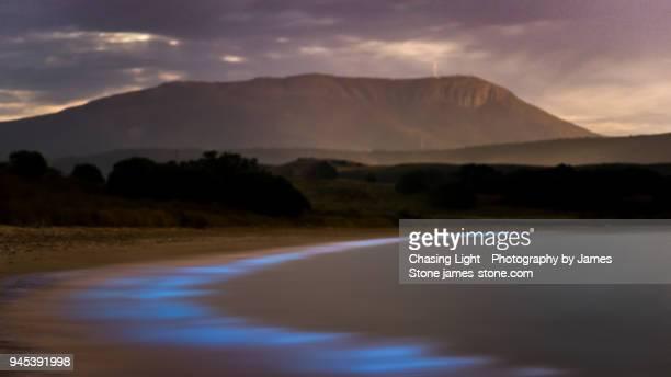 bioluminescence - hobart, tasmania - bioluminescence stock pictures, royalty-free photos & images