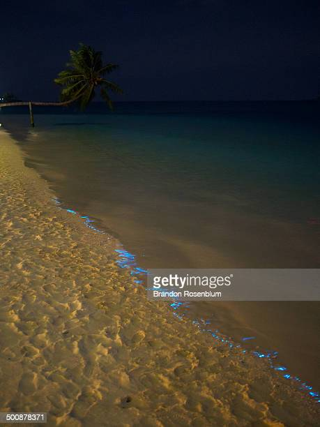 Bioluminescent phytoplankton