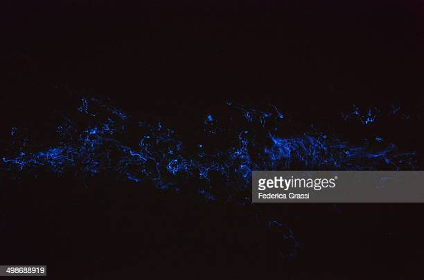 bioluminescent plankton - bioluminescence stock pictures, royalty-free photos & images