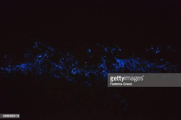 Bioluminescent Plankton