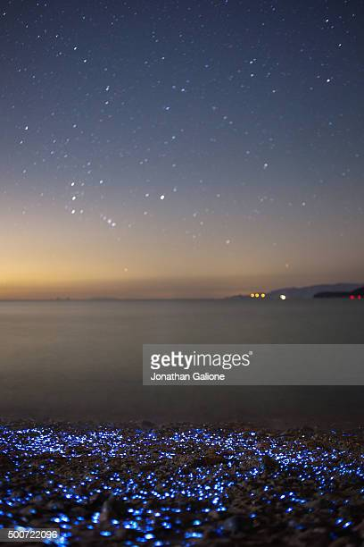 Bioluminescent Sea Fireflies