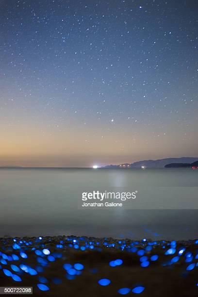 Bioluminescent Sea Fireflies