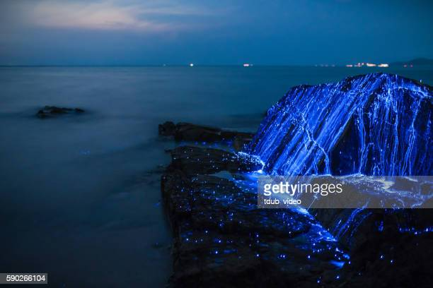 bio-luminescent shrimp spill over a rock on the coast - tdub_video stock pictures, royalty-free photos & images