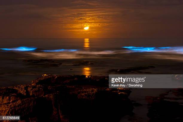 Bioluminescent tide (red tide) at La Jolla Cove