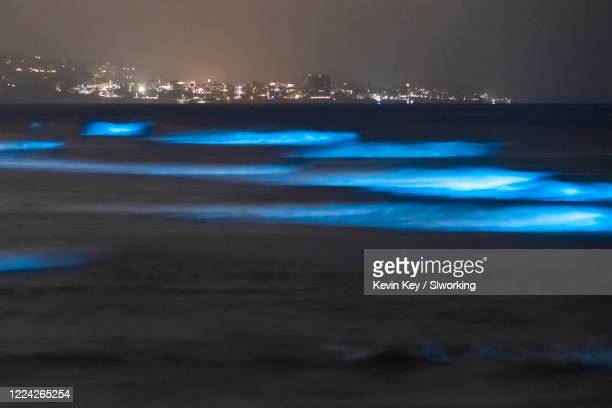 bioluminescent tide glows blue at the beaches in san diego county - plankton stock pictures, royalty-free photos & images