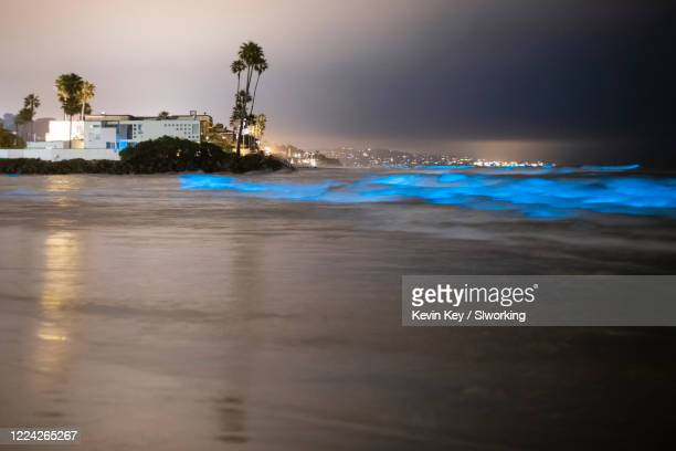bioluminescent tide glows blue at the beaches in san diego county - red_tide stock pictures, royalty-free photos & images