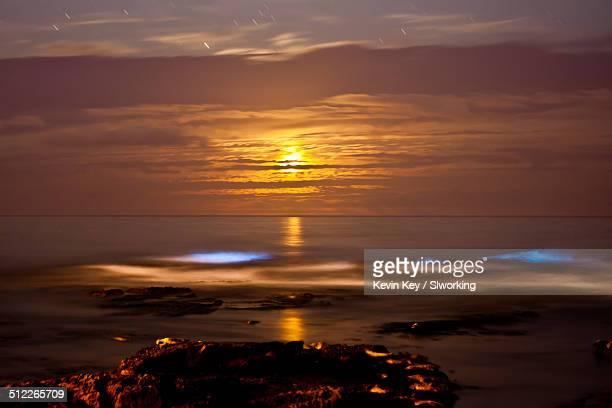 Bioluminescent tide