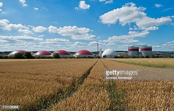 Biomasse Energie Pflanze in einer ländlichen Landschaft