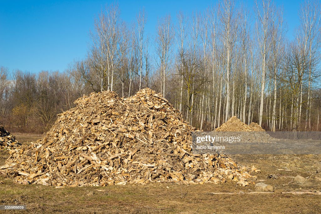 Biomass from lumber industry discards : Stock Photo