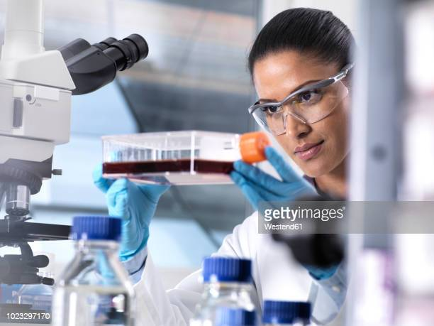 Biomedical Research, female scientist viewing stem cells developing in a culture jar during an experiment in the laboratory
