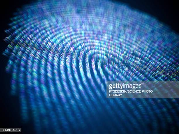 biometric authentication, illustration - biometrics stock pictures, royalty-free photos & images