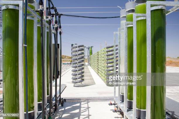 Bioreactors filled with green algae fixing CO2