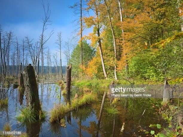 biosphärenreservat schorfheide-chorin, plagefenn/ schorfheide-chorin biosphere reserve - named wilderness area stock pictures, royalty-free photos & images