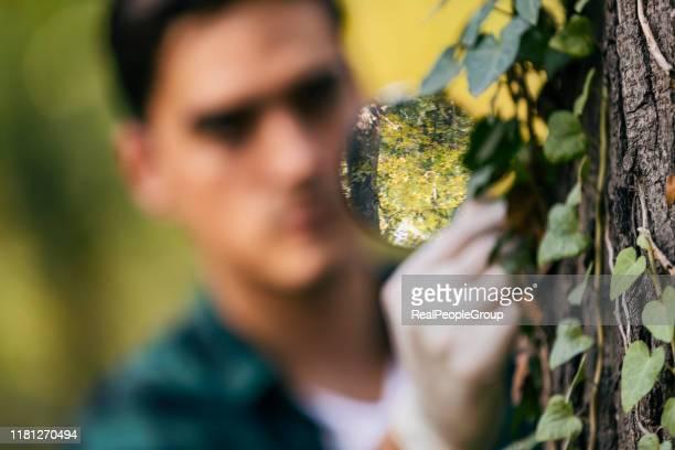 biotechnologie-mann-ingenieur untersucht pflanzenblatt auf krankheit - umweltthemen stock-fotos und bilder