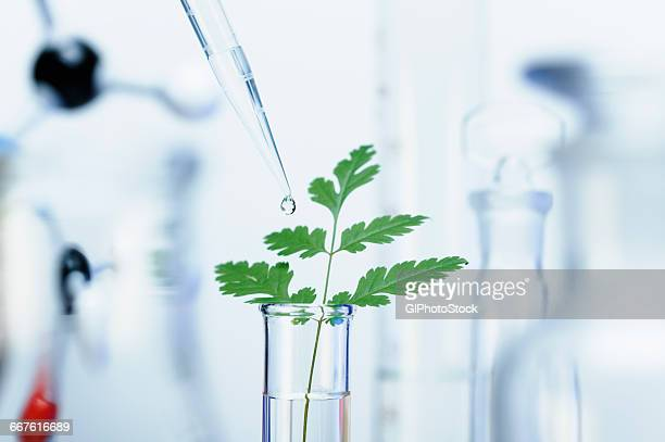 Biotechnology research. A precision micropipette is used to transfer a small amount of liquid to a test tube with a green leaf. Out-of-focus laboratory glassware