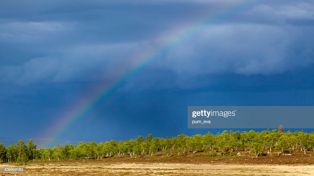 Birch, blue sky and rainbow : Stock Photo