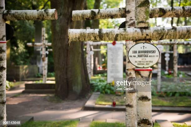 birch crosses at powazki military cemetery, warsaw, poland - varsóvia imagens e fotografias de stock