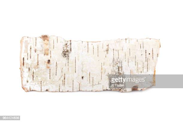 birch firewood tree log on white background - bark stock pictures, royalty-free photos & images